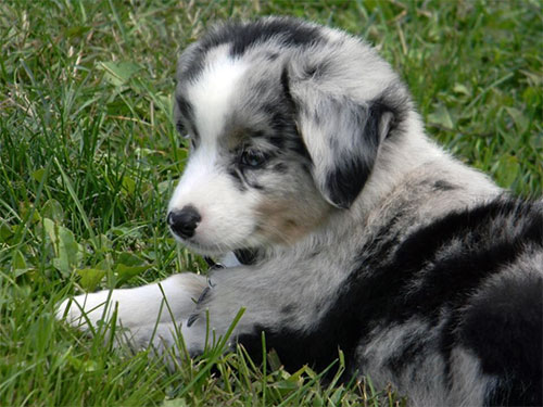 puppy-boo