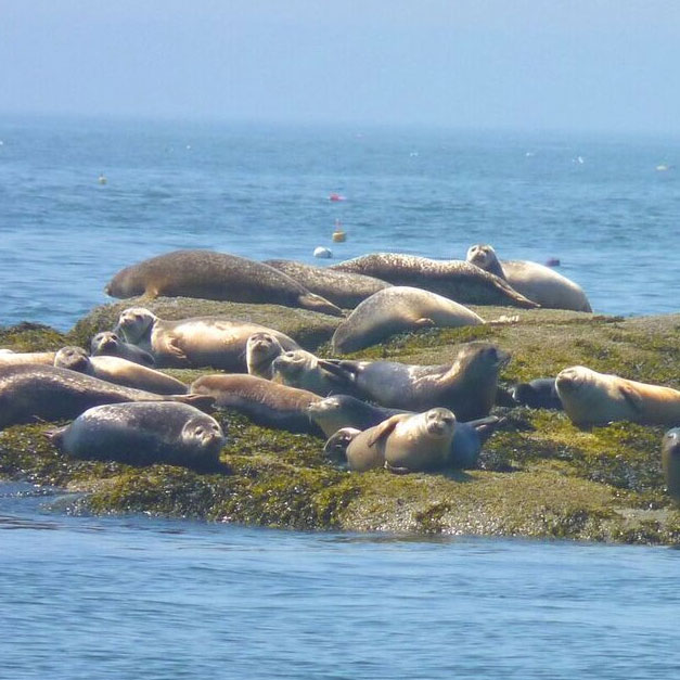 Seal Watching Trip